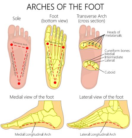 No Foot, No Farrier