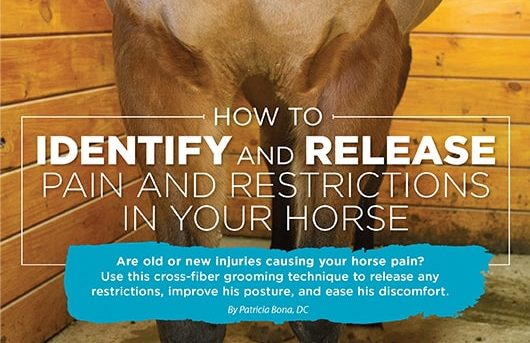 How to identify and release pain and restrictions  in your horse