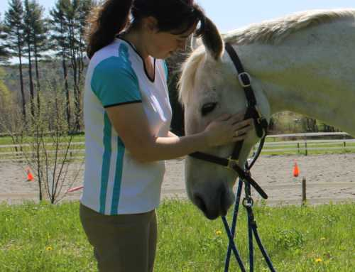 How to Prevent Injuries When Massaging Your Horse
