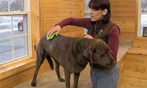 Posture-Prep-for-dogs-001