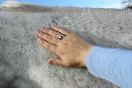 what we can learn by massaging our horse