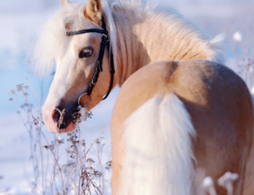 Holistic Horse Wound Care for a Winter's Day